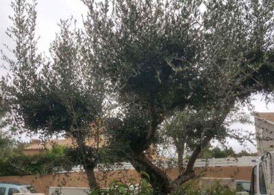 olivier-avant